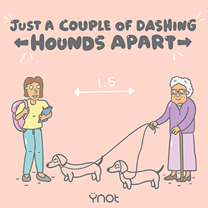 Dashing hounds